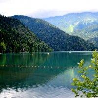 Озеро Рица :: Геннадий Ячменев