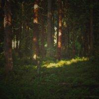Брызги солнечного света :: Григорий Кучушев