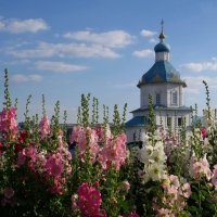 Чебоксары - город мальвы :: Ната Волга