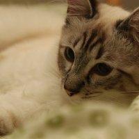 Dayzi My cat :: Dmitrijs Jarmolovics