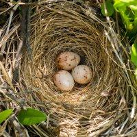 гнездо :: Денис Антонов