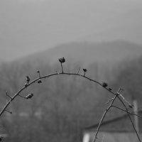 Туманно :: Ксения Николаенко