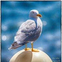 Чайка :: Leo Alex Photographer