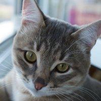 мой кот :: Андрей