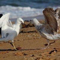 разборки на пляже :: Сергей Корейво