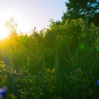 В лучах заката 2 (июль 2014) :: Алексей Макеев