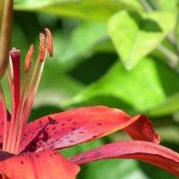лето..дача..цветы. :: Мария Морозова