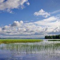 Ковжское озеро :: Валерий Талашов