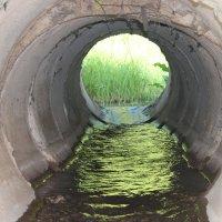 Зелёный ручей. :: Наталья Юрова