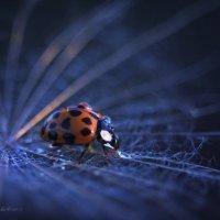 Ladybird :: Марина Остапенко