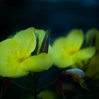 Цветы :: Владимир Боровков