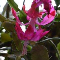 цветок :: Лейла А