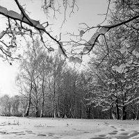 зима :: Женя Лузгин