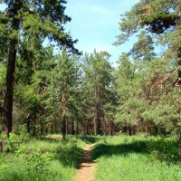 Начало лета в лесу :: Стас Борискин (Stanisbor)