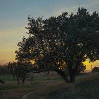 закат за деревом :: Владимир Боровков
