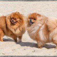 На пляже ветер :: Леонид