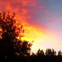 Небесные огни :: Мухаббат Юлдашева