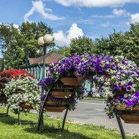 Цветы :: Валерий Тумбочкин