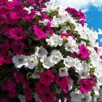 Городские цветы. :: Жанна Викторовна