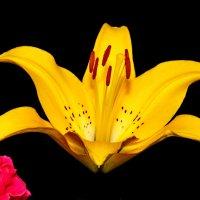 цветок :: Андрей Волгоградский