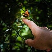 Бабочка присела... :: Анжелика Литвинова