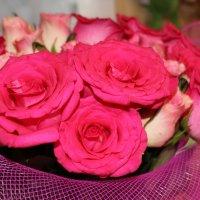 розовые розы :: Олечка Жилина
