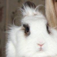 кролик :: Олечка Жилина