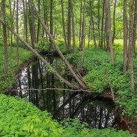 Лесной ручей :: Лариса Кайченкова