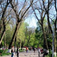 Апрель,вечер в парке... :: Тамара (st.tamara)