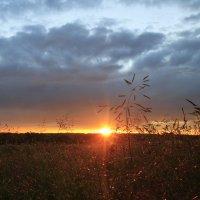 Укутанный солнечной патиной вечер :: Алёна Гершфельд