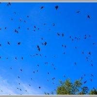Птицы :: Рамиль Хамзин