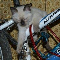 велосипед :: Лёля Hrom