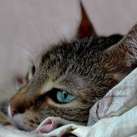 зеленоглазый кот! :: Надежда Кашицина