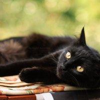 Cat :: Руслан