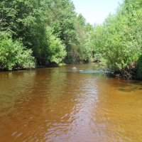 Река Черёха :: BoxerMak Mak