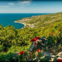 Маки, море, горы! :: Сергей Седенко