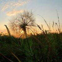Ловец солнца :: Тамара