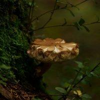В тени таинственного леса-2... :: Федор Кованский