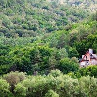 Дом в лесу :: Sergey Shcheblykin
