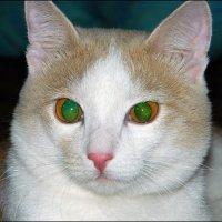 Зеленоглазый :: Дмитрий (White Starik) Фотолюбитель