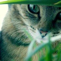 Кошачий глаз :: Анастасия Омельченко