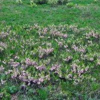 розовая полянка :: Валерия Шамсутдинова