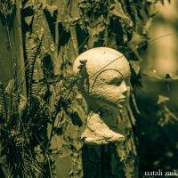 Потерянная голова :: Натали Заика