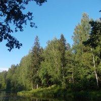 Прогулка в лесок :: Наталья Рябкова