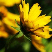 Жёлтое настроение :: Galina Belugina