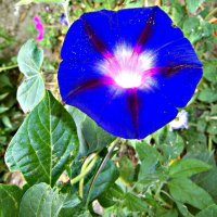цветок :: Татьяна Королёва