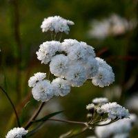 цветок :: vladimir воронов