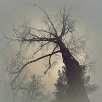 Fog :: Сергей Ходор