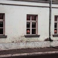 окна :: Константин Нестеров
