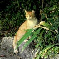 Заморский кот. :: Елизавета Успенская